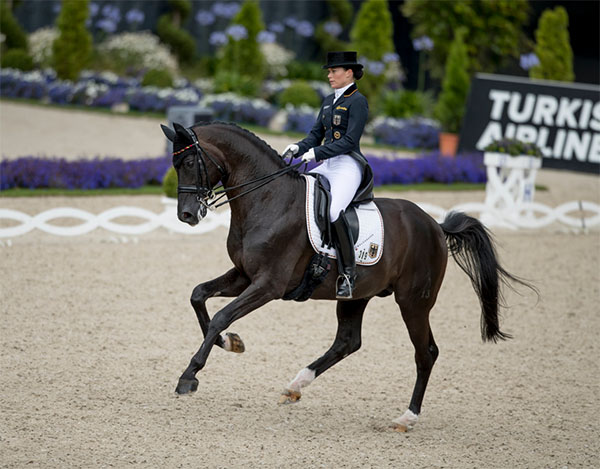 "Kristina Sprehe &amp; Desperados Aachen CHIO Dressage 2016> <br></p><h6>Vice-like grip</h6><p>The Germans already had a vice-like grip at the head of the leaderboard after the Grand Prix, with a combined score of 246.285. Team USA's Peters, Katherine Bateson-Chandler (Alcazar), Shelly Francis (Doktor) and Arlene Page (Woodstock) were in second on 218.404 and next best were the Danish foursome of Daniel Bachmann (Blue Hors Hotline), Anders Dahl (Selten HW), Agnete Kirk Thinggaard (Jojo AZ) and Cathrine Dufour (Atterupgaards Cassidy) on a tally of 214.242. </p><p>Spain, Sweden, Great Britain, Belgium, Japan and Australia lined up behind them in that order, but only the top six teams went into yesterday's Grand Prix Special in which, once again, none came anyway close to the on-form Germans. </p><p>The American side was reduced to just three members when Bateson-Chandler's Alcazar had to undergo colic surgery overnight, but the 11-year-old gelding was reported to be on the mend yesterday and plans were already being put in place for recovery-time in Europe before he begins to make his way home to Florida. </p><p>Judges Peter Holler (GER), Eduard de Wolff van Westerrode (NED), Maribel Alonso (MEX), Gary Rockwell (USA) and Stephen Clarke (GBR) gave their first big mark of the Grand Prix Special to Dorothee Schneider and Showtime, the first to score above 80 percent when putting 81.902 on the board. </p><p>Schneider was delighted with her horse. ""He trusts me more and more. He has never been in a stadium like that before, but it is as though he asks me when he is insecure: 'Can I do this?' And I tell him, 'Yes, you can!' and then he does it!"" she explained.</p><h6>Next</h6><p>Team-mate Rothenberger was next into the ring with Cosmo who showed superb balance and suspension in passage but had mistakes in the one-tempi changes for a score of 76.412. ""We made a good start, but my horse got a bit tired in the canter and that's why we had the mistakes"" Rothenberger explained afterwards.</p><p>Third-last to go was Werth with Weihegold whose test was not quite as perfect as it had been on Thursday but who still managed to put 80.686 on the scoreboard. Normally piaffe is one of the mare's strongest movements, but today there were two mistakes and Werth blamed herself for those. ""I did something different in our warm-up and I think it unsettled her a bit so she lost a bit of power and confidence and we got a bit stuck"" said the multi-medalled Olympian. ""But it's important that things like this happen so we can learn from them!"", she added.</p><h6>Leading partnership</h6><p>Bröring-Sprehe and her black stallion, Desperados, had some mistakes in their canter tour, but the pure quality of the work produced by this fabulous horse was good enough to earn a mark of 83.725 which put them way out into the lead. As always, the 29-year-old world no. 1 was a woman of few words when describing her successful afternoon - ""I'm very satisfied"" she said, having posted what was always going to be the winning score.</p><p>America's Steffen Peters finished fourth again, this time on a mark of 76.627, and Team USA's combined total of 437.139 saw them line up second ahead of Denmark in third on 430.418 and Spain in fourth on 425.316. Sweden finished fifth on a final tally of 425.186, and when the overall calculations were done, the Americans were declared the first-ever FEI Nations Cup™ Dressage series champions. Just four points separated them from the runners-up from Sweden in the final analysis, while Denmark was another seven points adrift in third.</p><p>In total, 15 nations lined out in this first official season which followed three years of a pilot scheme. National federations used the series in a number of ways, from providing invaluable exposure to less-experienced riders to testing the form of potential championship candidates, and for Team Germany this final leg of the first official series worked out like a dream as they clearly demonstrated their formidable strength at a very important time. </p><p>Shortly after yesterday's competition concluded, German Chef d'Equipe Klaus Roeser announced that the four riders on the winning team at Aachen will represent their country at the 2016 Olympic Games.</p><h6>Result: </h6><p><b>1.&nbsp;&nbsp;&nbsp; Germany 492.598:</b><br> Cosmo 59 (Sonke Rothenberger) 75.600/76.412, Showtime FRH (Dorothee Schneider) 80.700/81.902, Weihegold OLD (Isabell Werth) 83.271/80.686, Desperados FRH (Kristina Broring-Sprehe) 82.314/83.725.</p><p><b>2.&nbsp;&nbsp;&nbsp; USA 437.139: </b><br>Alcazar (Katherine Bateson-Chandler) 66.314/DNS, Woodstock (Arlene Page) 68.971/71.451, Doktor (Shelly Francis) 72.200/70.647, Legolas 92 (Steffen Peters) 77.243/76.627.</p><p><b>3.&nbsp;&nbsp;&nbsp; Denmark 430.418: </b><br>Blue Hors Hotline (Daniel Bachmann) 71.071/70.686, Selten HW (Anders Dahl) 70.057/71.078, Jojo AZ (Agnete Kirk Thinggaard) 72.171/71.176, Atterupgaards Cassidy (Cathrine Dufour) 71.000/73.922.</p><p><b>4.&nbsp;&nbsp;&nbsp; Spain 425.316: </b><br>Altaneiro (Sergio Martin Palos) 68.586/68.529, Wolk (Jose Manuel Lucena Estrada) 68.786/62.922, Don Diego Ymas (Juan Matute Guimon) 69.743/67.725, Lorenzo (Severo Jesus Jurado Lopez) 74.357/76.176.</p><p><b>5.&nbsp;&nbsp;&nbsp; Sweden 425.186:</b><br> Languedoc (Kristian von Krusenstierna) 67.357/65.667, Di Lapponia T (Paulinda Friberg) 65.543/68.176, Happiness 26 (Michelle Hagman) 71.214/70.118, Pardon Magi (Tinne Vilhelmson-Silfven) 74.086/74.235.</p><p><b>6.&nbsp;&nbsp;&nbsp; Great Britain 420.419: </b><br>Amadeus (Daniel Watson) 66.886/65.588, Hofjuwel (Sarah Millis) 64.229/65.784, Marakov (Michael Eilberg) 72.000/72.216, Weekend Fun (Emile Faurie) 72.886/69.843.</p><p><a target="